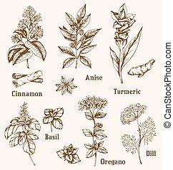 スパイス, herbs., 引かれる, 手
