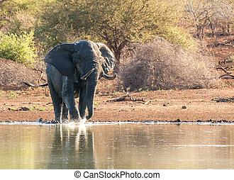 スプレーをかける, 象