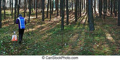 スポーツ, orienteering, 森林