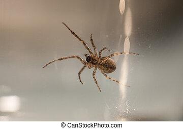 セクター, spider., クローズアップ, 欠けている