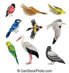 セット, あご, 羽, beaked, 鳥, 脊椎動物, 温血, ∥あるいは∥, 歯のない, aves, ベクトル