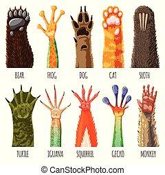 セット, ∥あるいは∥, サル, 足, pawky, 隔離された, 動物, 白, ペット, ほ乳類, イラスト, 手, 熊, 背景, フィート, pawed, 犬, ねこ, ベクトル, かぎつめ, こんにちは, animalistic
