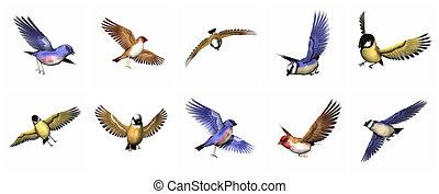 セット, の, アトリ, 鳥, -, 3d, render