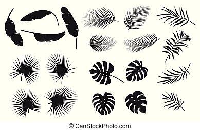 セット, の, トロピカル, 葉, 植物, 上に, a, 白い背景