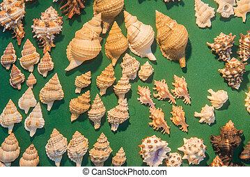 セット, の, 様々, 海の貝, 上に, 緑の背景