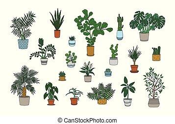 セット, の, 装飾用である, houseplants, 成長する, 中に, プランター, 隔離された, 白,...