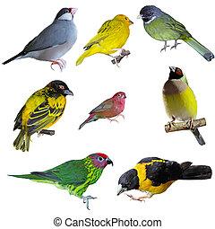 セット, の, 鳥