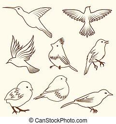 セット, の, differnet, スケッチ, 鳥