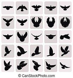 セット, アイコン, 単純である, 飛行, ハト, 黒, 鳩