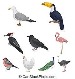 セット, アイコン, 大きい, シンボル, コレクション, 鳥, イラスト, ビットマップ, style., 漫画, 株