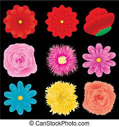 セット, イラスト, 4, ベクトル, デザイン, 花の 部品, 要素