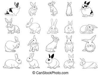 セット, ウサギ