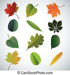 セット, カラフルである, leaves., 秋