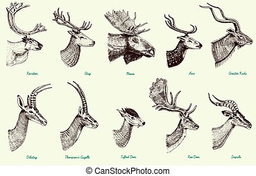セット, ガゼル, 鹿, 食用魚卵, 雄鹿, 引かれる, より大きい, オオシカ, 鹿, トナカイ, dibatag, ...