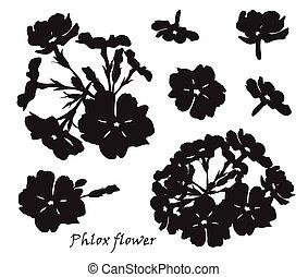 セット, シルエット, leafs., phlox, 背景, 黒, 白い花