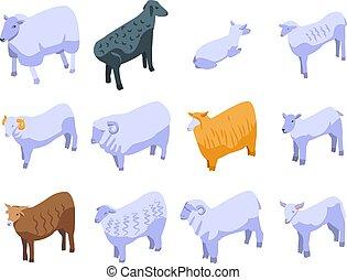 セット, スタイル, アイコン, sheep, 等大