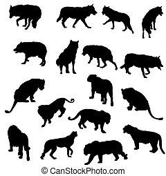 セット, トラ, シルエット, ライオン, leopareds, 狼