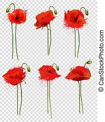 セット, バックグラウンド。, vector., ケシ, 花, 透明, 赤