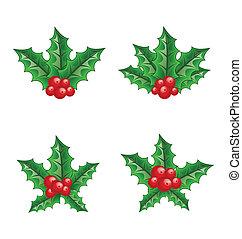 セット, ブランチ, 隔離された, ベリー, 背景, 西洋ヒイラギ, 白い クリスマス