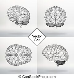 セット, ベクトル, イラスト, 人間, brain., ∥, 構造, 格子, の, polygons., 抽象的,...