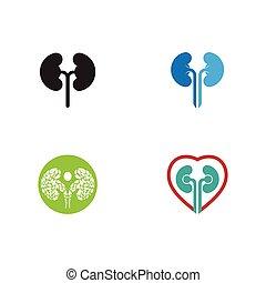セット, ベクトル, デザイン, ロゴ, イラスト, 腎臓