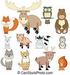 セット, 動物, 森林