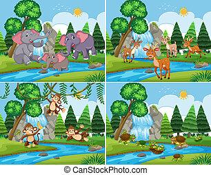 セット, 動物, 現場, 自然