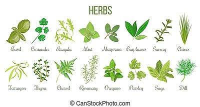 セット, 料理の, 大きい, 現実的, タイム, herbs., セージ, バジル, ローズマリー