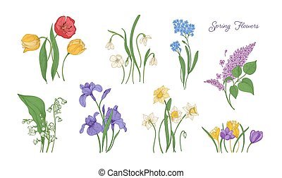 セット, 春, 図画, plants., カラフルである, -, ユリ, アイリス, 束, スイセン, 花が咲く, 花, 谷, illustration., 忘れな草, ライラック, 自然, snowdrop., クロッカス, ベクトル, チューリップ, 咲く