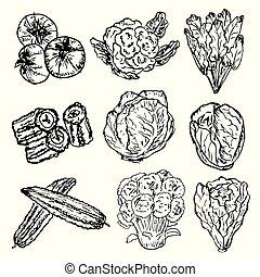 セット, 有機体である, illustration., 野菜, 健康, set., 手, ハーブ, ベクトル, 食物, 引かれる, スパイス, 図画