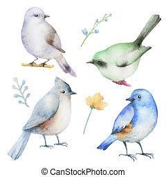 セット, 水彩画, birds.