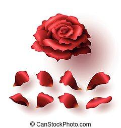 セット, 現実的, ローズ 花弁, グロッシー, 咲く, 赤