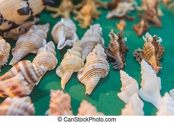 セット, 背景, 殻, 緑, 海, 様々