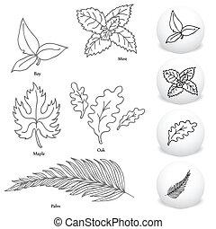 セット, 葉, 図画