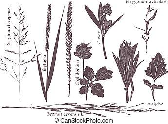 セット, 葉, 牧草地, 草