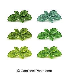 セット, 葉, 葉, 隔離された, ハッカドロップ, ベクトル, 白, ミント, spearmint