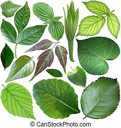 セット, 葉, 隔離された, 緑の背景, 白