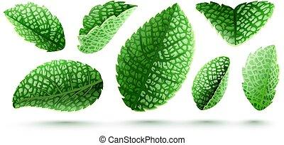 セット, 葉, 隔離された, 緑, 新たに, ミント