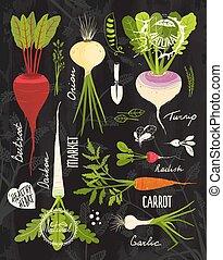 セット, 黒板, 野菜, 上, デザイン, 根, 葉が多い