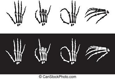 セット, anatomy., 手