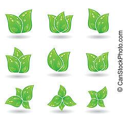 セット, eco, 葉, 隔離された, 緑の背景, 白