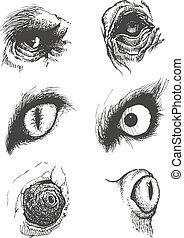 セット, eps8, 手, ベクトル, 動物, eyes., drawn.