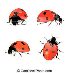 セット, ladybugs., collection., 手, ベクトル, 引かれる, テントウムシ