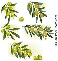 セット, olives., 背景, ベクトル, 緑, illustration.