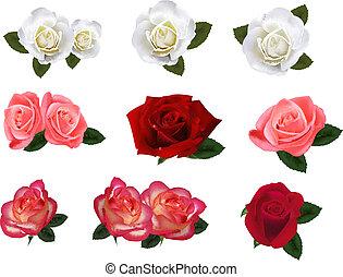セット, roses., 大きい, 美しい