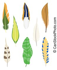 セット, white., feathers., 隔離された