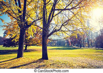 セントラル・パーク, ∥において∥, 日当たりが良い, 秋日