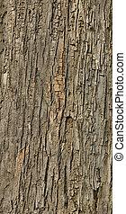 タイルを張った, 木樹皮, 手ざわり