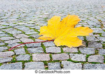 タイル, 道, 葉, かえで, 黄色