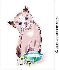 タイ人, 食べること, 子ネコ